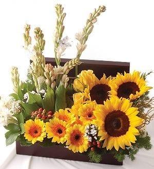 Florist in Butterworth   Sun-Flower Basket -6WB28_Sunny Beyla