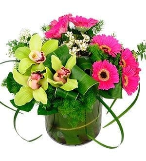 Florist Malaysia   Cymbidiums-Gerberas Fresh Flower Glorious Cymbidia