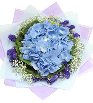 Hand Bouquet Solely Hydrangea Online Florist Malaysia