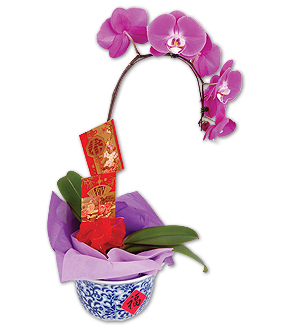 CNY Gift Flower - Peace - Purple Orchid