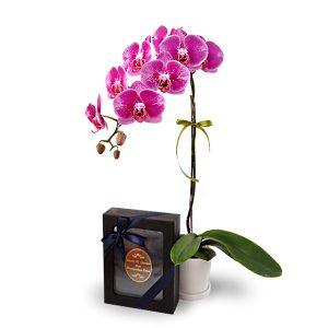 Hari Raya flowers gift Malaysia HALIA ORCHIDHALIA ORCHID