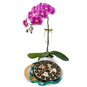 Hari Raya Flower Gift JEJARUM ORCHIDJEJARUM ORCHID