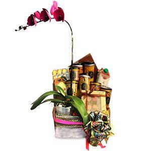 Deepavali Flower Gifts Malaysia - PAKTI PHALAENOPSIS ORCHID